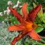 Die Orange Blume 2