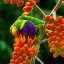 Rainbow Lorikeet at Mount Coot-tha Botanical Garden