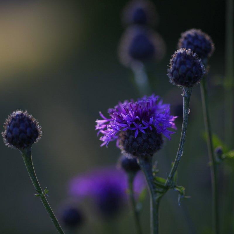 """""""I think it pisses God off if you walk by the colour purple in a field somewhere and don't notice it."""""""