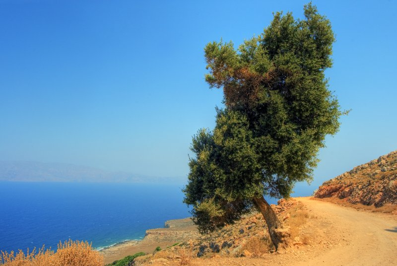 The sea, the mountain, the tree, the road and the sky