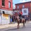 Horse Riding in Philly Ghetto - Rider