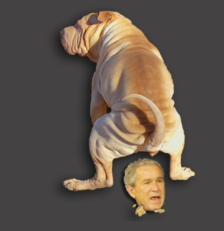 Aspen, Chinese Shar Pei Puppy Dog with an opinion about politics and George Bush