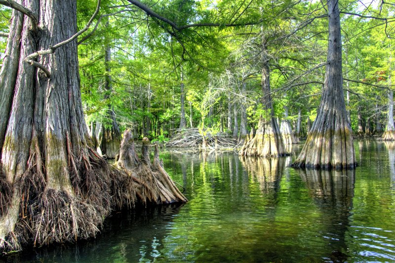 Beaver Lodge and Cypress Trees