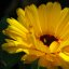 yellow Flower...