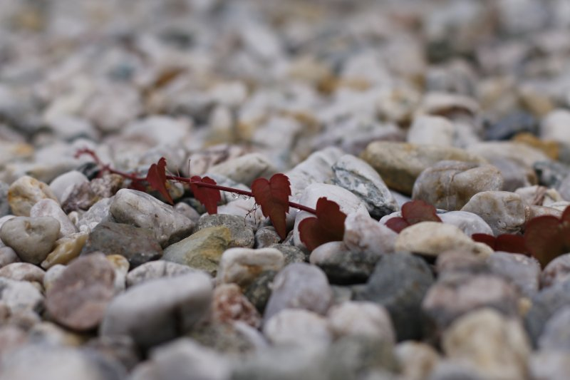 Heart-Leaf and Stones