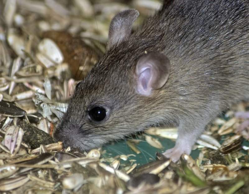 A small mouse
