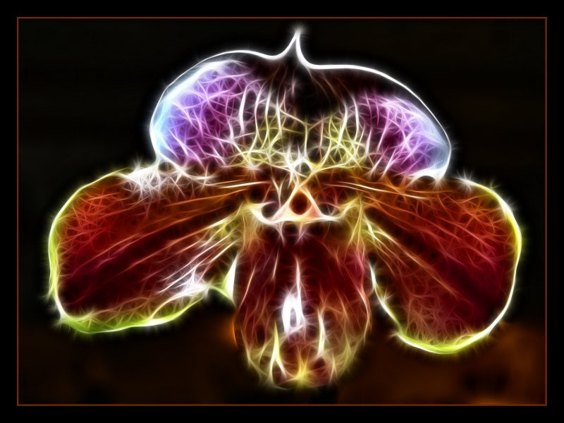 Flammende Orchidee
