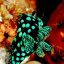 nudibranch (the jewels of the sea)