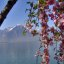 Lac Leman - Genfersee