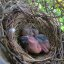 Baby Cardinals Day 2