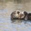 sea-otter-bay_11