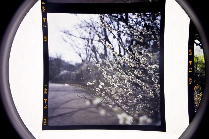 Reversal film with a loupe #1