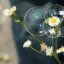 Flowers in a bubble