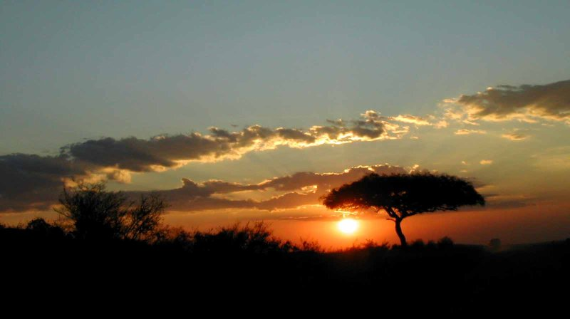 sunset and acacia