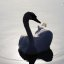Swan in backlight