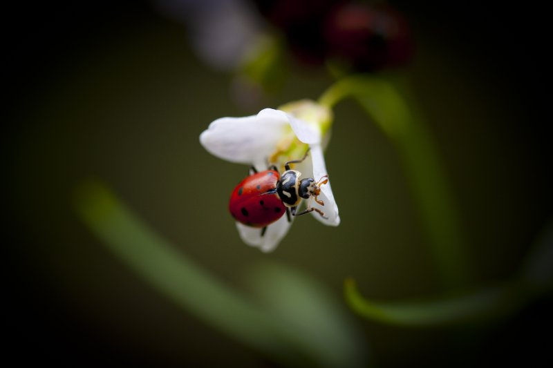 Lady Bug Revisited