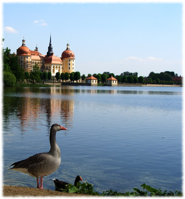 Ente am See