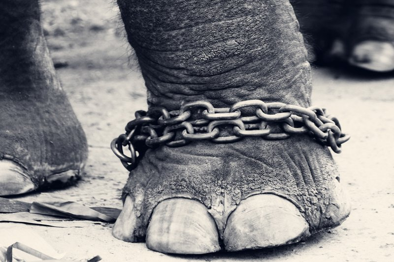 CHAINED!!!