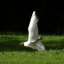 mouette rieuse / black-headed gull
