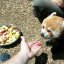 Feed the Firefoxes