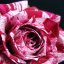 Marble rose 2