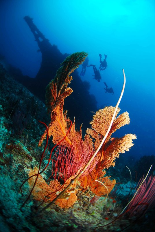 reef forests fantasy #9