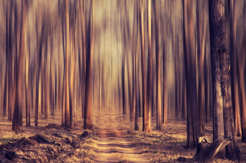 Forest dream!
