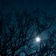 The moon behind the trees