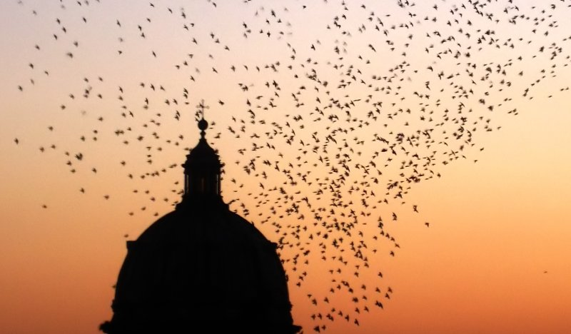 birds and dome, sunset