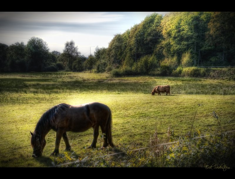 Fields of Kungälv #HDR #photog