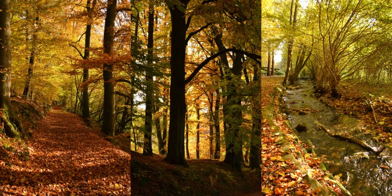 Herbstcollage