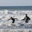 Father and son surf lesson in Morro Bay, CA 8 of 12