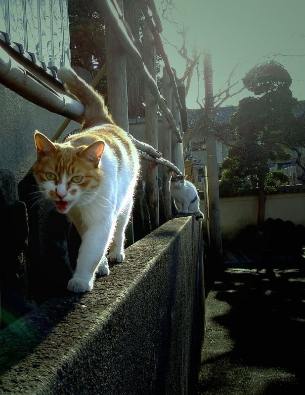 Temple cats  backlighted