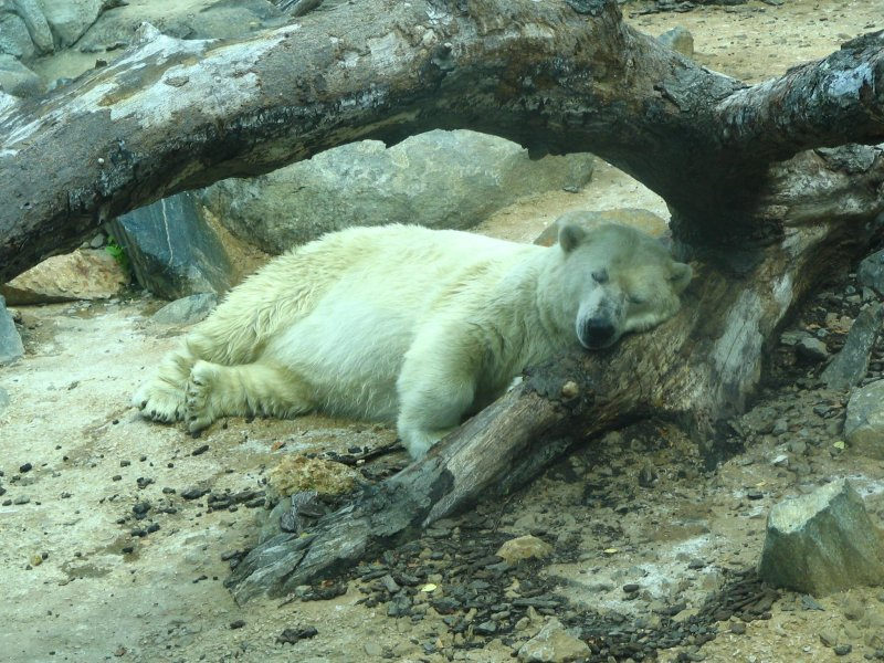 Alaska, The Baltimore Zoo Polar Bear