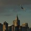 Seagull in New York City