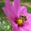 Summer, Bees and Flowers