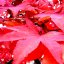 Red Leaves Queenswood Park Hereford #dailyshoot