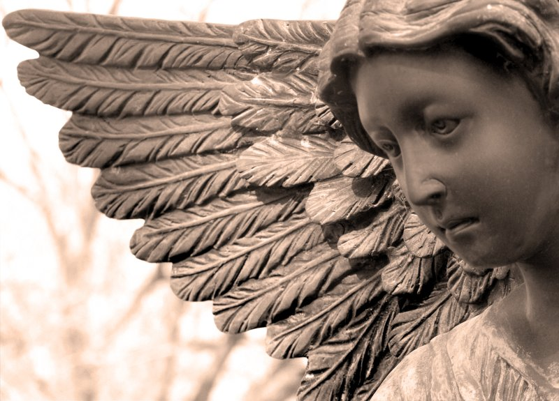 We are protected by her wings.