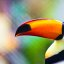 Toucan Bird, Ocean Park, Hong Kong