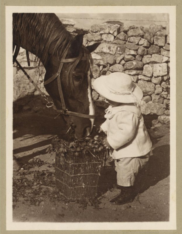 Vintage Picture of a Small Child helping to feed the Horse his Food