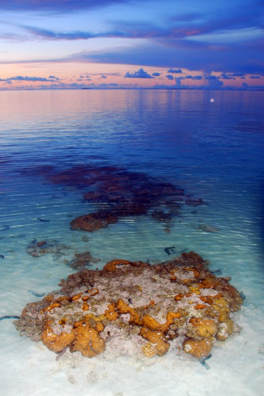 Coral at twilight
