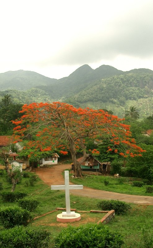 red flowering tree with cross