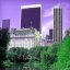 Central Park in purple and green...