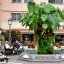 Green Living Plant Fountain