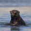 sea-otter_a_f_5.6_1_2500 s_morro-bay