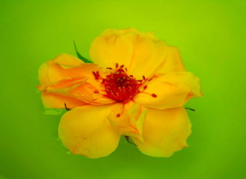 Yellow Red Green