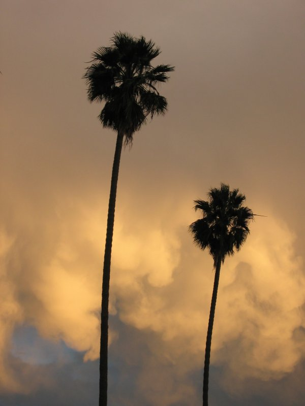 Palm Trees - Sunset