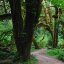 Rain Forest im Olympic Nationalpark des USA-Staates Washington