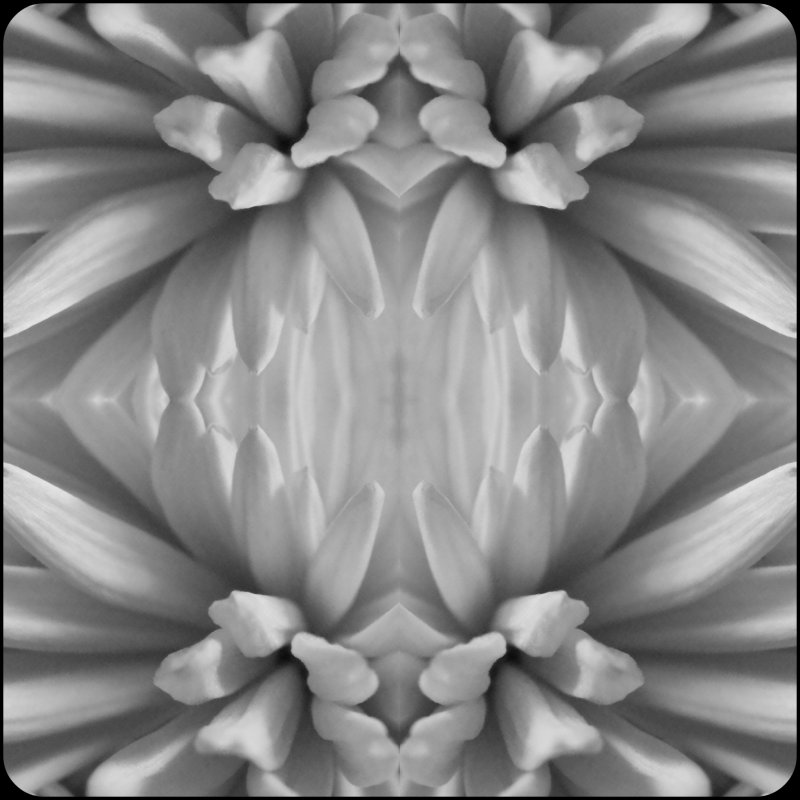Flower : EVOLUTION : See : FEEL : Beyond : OBVIOUS! Enjoy : the TEXTURE : the lines! :)