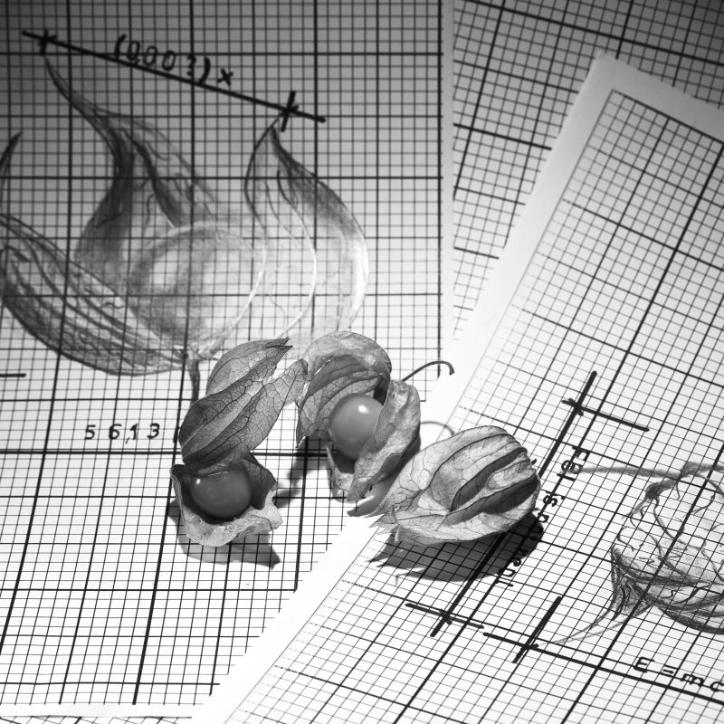 How to construct three Physalis in black and white